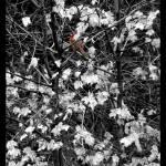 Back Yard Nature Shots Prints & Posters