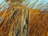 Splinters and Tall Grass