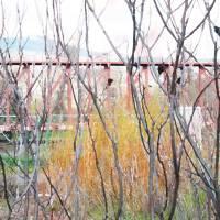 Branch Bush Train by Faye Cummings