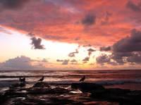 Sunset and Gulls by David Kocherhans