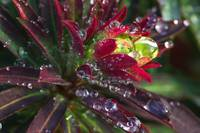 Water Drops Plant 08