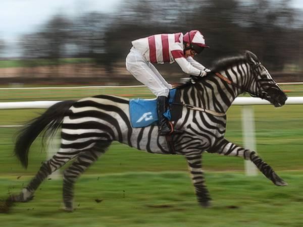Racing Stripes 5ec51460-8163-4281-8c4a-096ff7887b5d