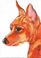 Miniature Pinscher 1