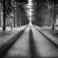 Down the Path Art Prints & Posters by John Ryan
