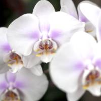 365 white river garden orchids. Art Prints & Posters by Casey Mullins