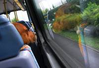Dog on London Bus