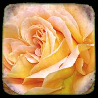 Through the Viewfinder photography -Flower I by Ricki Mountain