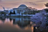 thomas jefferson and the blossoms