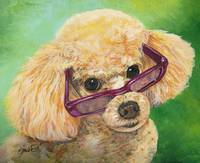 Apricot Poodle in Shades
