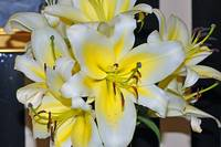 Lillies in the Lobby The Belfry Inn