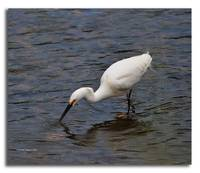 Another View of Egret Fishing