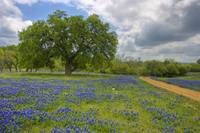 Texas Hill Country Spring 356
