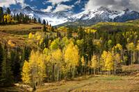 Yellow Aspens in The Rockies