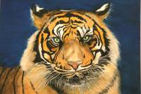 Tiger eyes staring - painting
