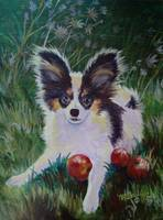 Papillon with Crabapples