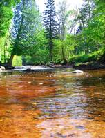 Northshore Creek Brown