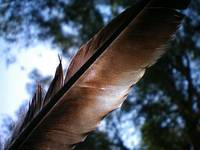 Bokeh Feather