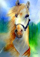 My Horse, My Love, My Friend
