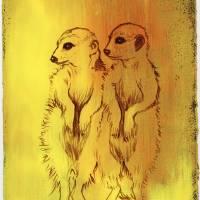 Meerkats Art Prints & Posters by Stephanie Han