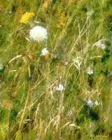 Wind Through the Meadow
