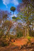 Sandy Heath tree