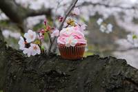 Cupcake vs. Cherry Blossom