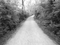 Towpath Trail in Motion