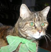 Cat with green bow