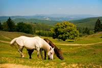 Rural landscape with horses