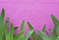 iris plants growing against pink wall