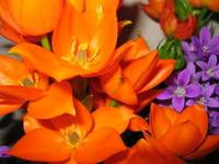 Orange and Purple flowers (c)