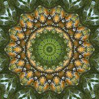 Yellow Tree Flower Kaleidoscope Art 3
