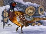 Winter Pheasant
