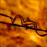 Orange And Yellow Barbed Wire Fugue