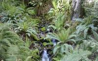 Mountain Stream with Ferns and Sunlight