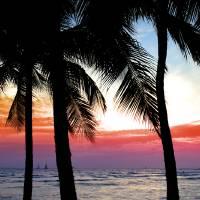 Palm Tree Sunset by Roger Dullinger