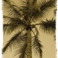 Palm Tree by Roger Dullinger