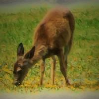 Deer Dream by Gary Miles