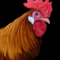 Painted Rooster by Roger Dullinger