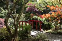 Japanese Garden Bridge with Rhododendrons by Carol Groenen