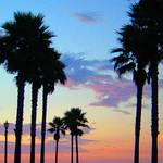 Sunset Palms 1