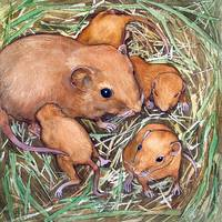 Nest of Mice