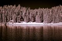 trees on mountain lake