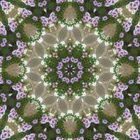 Mauve and White Lantana Kaleidoscope Art 3