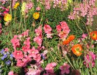 More of God's Flowerbed