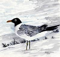 sea gull painting square art print