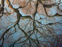 Reflection of Tree Branches
