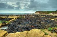 South Landing, Flamborough - looking towards Bridl