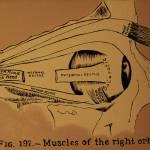 orbital lobe Prints & Posters