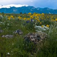 """Spring Wildflowers"" by timleonhardt"